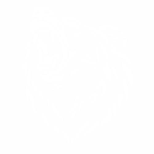 Медведь - 10