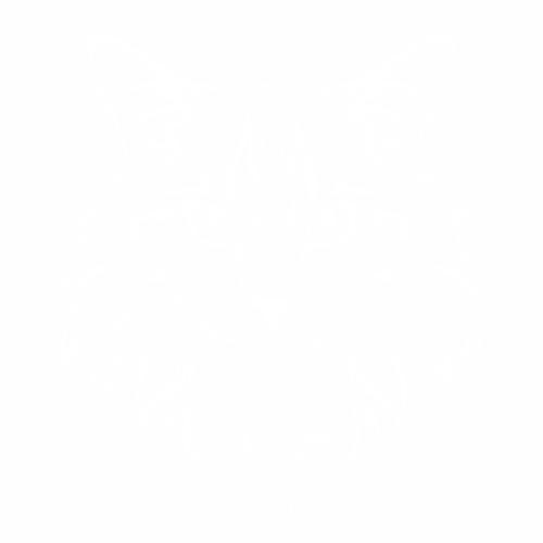 Кошка - 2