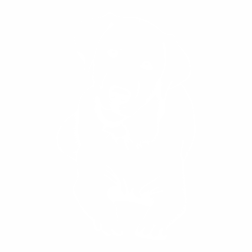Лабрадор - 3