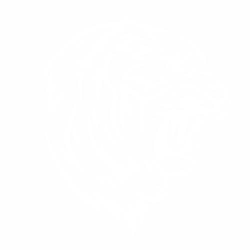 Тигр - 12