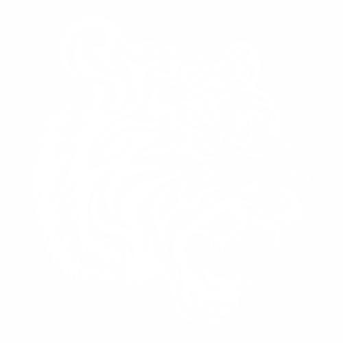 Тигр - 13