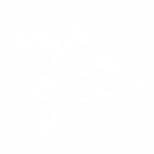 Волк - 9