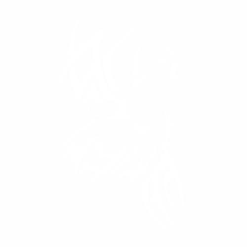 Волк - 17
